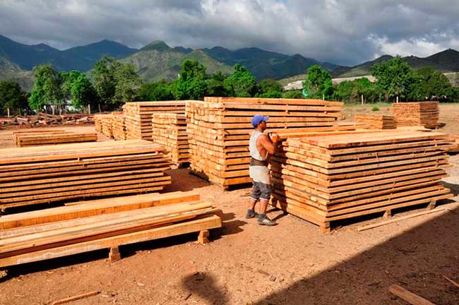 La madera como base de la bioeconomía